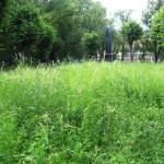 Františkina záhrada (11)