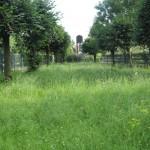 Františkina záhrada (20)